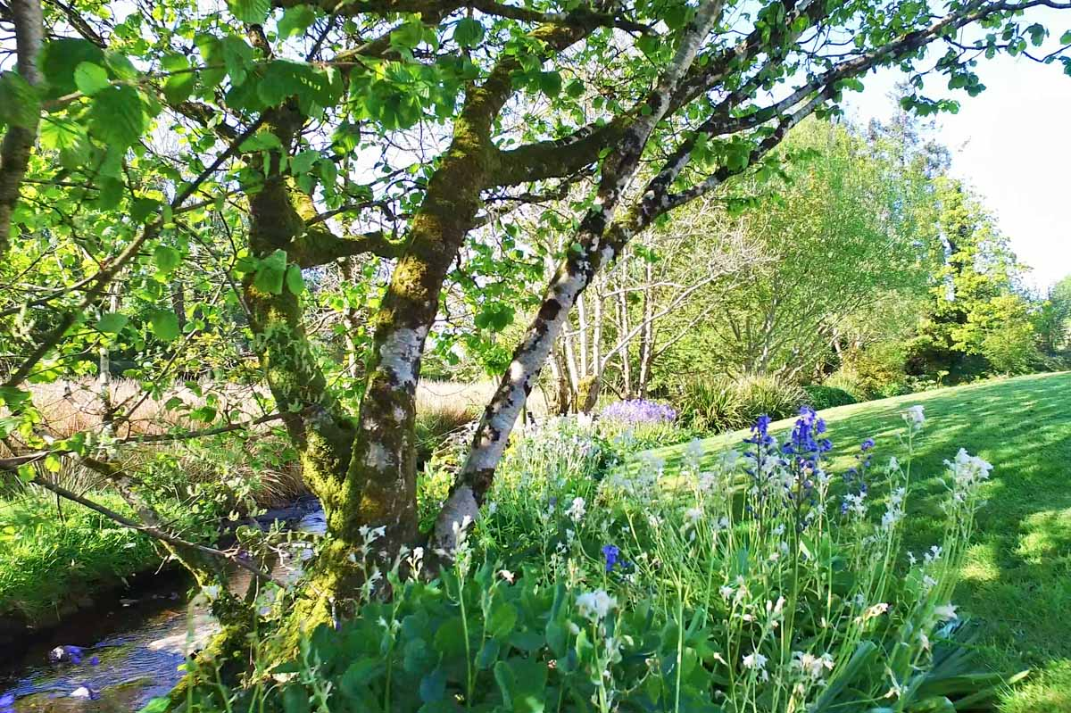 7_Bluebells and Snowdrops