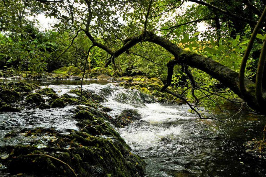 5_Saivnose_River